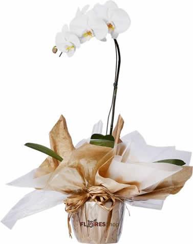 2062 Orquídea