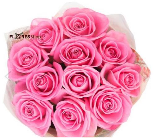 2565 Mimo de Rosas Rosa
