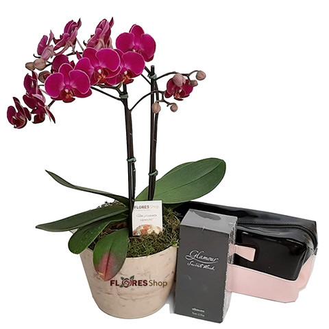 3177 Mini Orquídea Glamour