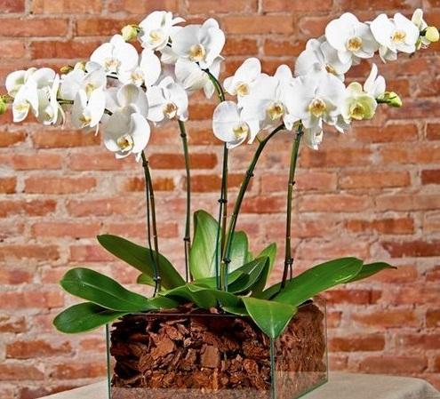 3375 Orquídeas no Jardim