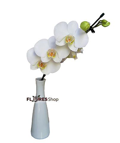 4587 Solitária de Orquídea