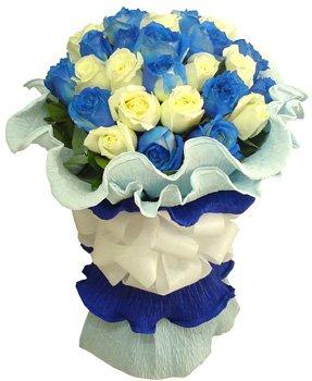 463 Encanto Blue