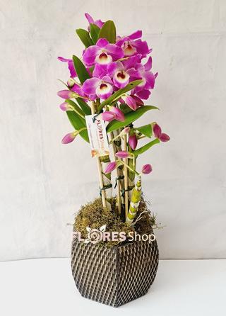 5442 Orquídea Amorosa Cymbidium